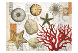 Sea Treasures Posters by  Ophelia & Co.