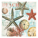 Coral Beach Shells Prints by  Ophelia & Co.