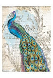 Peacock 1 Print by  Ophelia & Co.