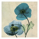 Iceland Poppy Duo 2 Prints by Albert Koetsier