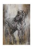 Zebra Study Giclee Print by Rikki Drotar