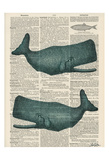 Sperm Whale Prints by Tina Carlson