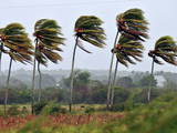 Palm Trees are Moved by the Wind in Pinar Del Rio Photographic Print by Alejandro Ernesto