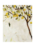 Meyer Lemon Tree Giclee Print by Jodi Maas