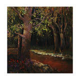 Hidden Stream Forest Giclee Print by Timothy O'Toole