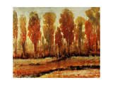 Texture of Trees Giclee Print by Timothy O'Toole