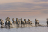 On the Run Photographic Print by Art Wolfe