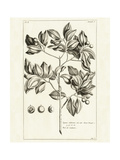 Tropical Leaf Study II Print by Hugo Wild