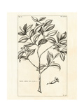Tropical Leaf Study I Prints by Hugo Wild