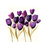 Tulips Giclee Print by Nicola Evans