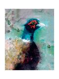 Male Pheasant Reproduction procédé giclée par Simon Howden