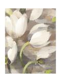 Tulip Delight II Premium Giclee Print by Albena Hristova
