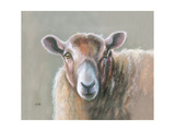 Looking Sheepish Giclee Print by Louise Brown