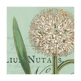Botanique Bleu II Posters af Hugo Wild