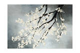 Cherry Tree Giclee Print by Kari Taylor
