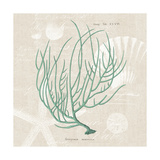 Gorgonia Miniacea on Linen Sea Foam Sq Prints by Wild Apple