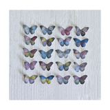 Butterfly Grid Giclee Print by Howard Shooter