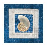 Sea Shell II on Blue Poster by Belinda Aldrich
