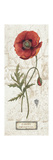 Royal Garden IV Premium Giclee Print by Daphne Brissonnet