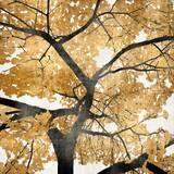 Golden Leaves Prints by Kate Bennett