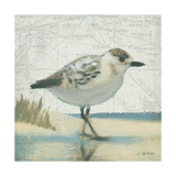 Beach Bird I Reproduction giclée Premium par James Wiens