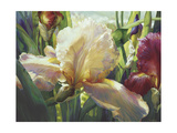 Corrine's Iris Posters by Elizabeth Horning