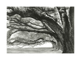 Oak Alley Giclee Print by Jill Tishman