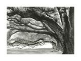 Oak Alley Giclee Print by Jill Tishman