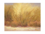 Winter Cottonwoods Giclee Print by Teri Jonas