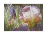 Perrenial Beauties Giclee Print by Elizabeth Horning