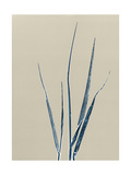 Tall Grass 3 Giclee Print by Mary Margaret Briggs