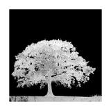 Screened Tree C Giclee Print