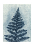 Blue Fern 2 Giclee Print by Mary Margaret Briggs