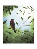 Vireo Obscurus Giclee Print by Fred Lisaius