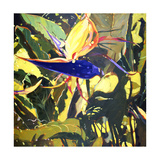 Bird of Paradise Giclee Print by Darrell Hill