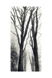 Intertwined Thru Time Giclee Print by Jill Tishman