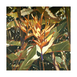 Orange Heleconia Giclee Print by Darrell Hill