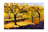 Riesling Vines Giclee Print by Janet Vanderhoof
