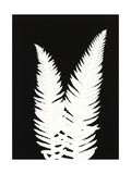 New Fern 9 Giclee Print by Mary Margaret Briggs