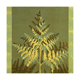 Tropical Fern 5 Giclee Print by Mary Margaret Briggs