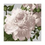 Vintage Florals C Giclee Print