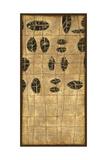 Patterns Kona Giclee Print by Debbie Angell