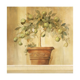 Lime Topiary Giclee Print by Hampton Hall