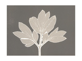 Horizontal Plants 12 Poster by Mary Margaret Briggs