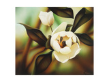 Magnolia Giclee Print by Warren Salter