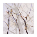 Branches of a Wish Tree B Giclee Print by Danna Harvey