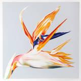 Paradisfågel Begränsad utgåva av Lowell Nesbitt