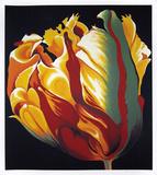 Parrot Tulip I Begränsad utgåva av Lowell Nesbitt