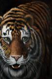 Tiger Giclée-Premiumdruck von Jutta Plath