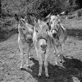 Trio Stampa giclee premium di Bernhard Böser